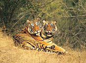 Taj Mahal Tour with Ranthambore